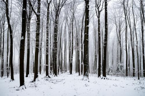 Winterwald im Nebel