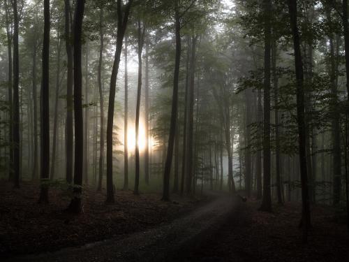 Nebelwald im Gegenlicht