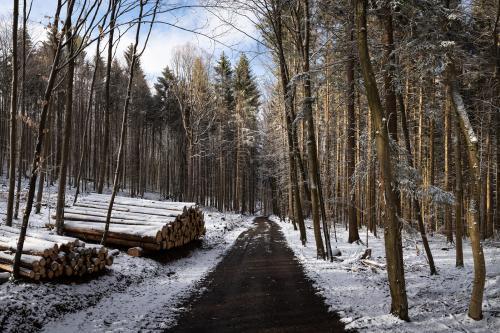 Waldweg mit verschneiten Holzstämmen