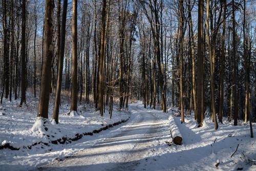 Weg nach Prevorst im Winterwald