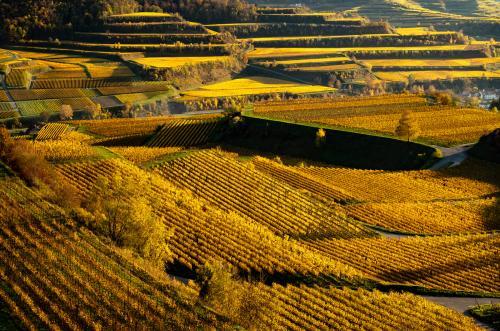 Weinberge am Kaiserstuhl im Herbst