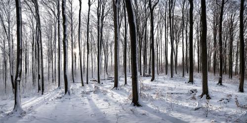 Winterwald bei Nassach im Gegenlicht Panorama